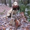 Zoé - Hunting 2004