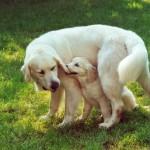 Vick - Zoé puppy