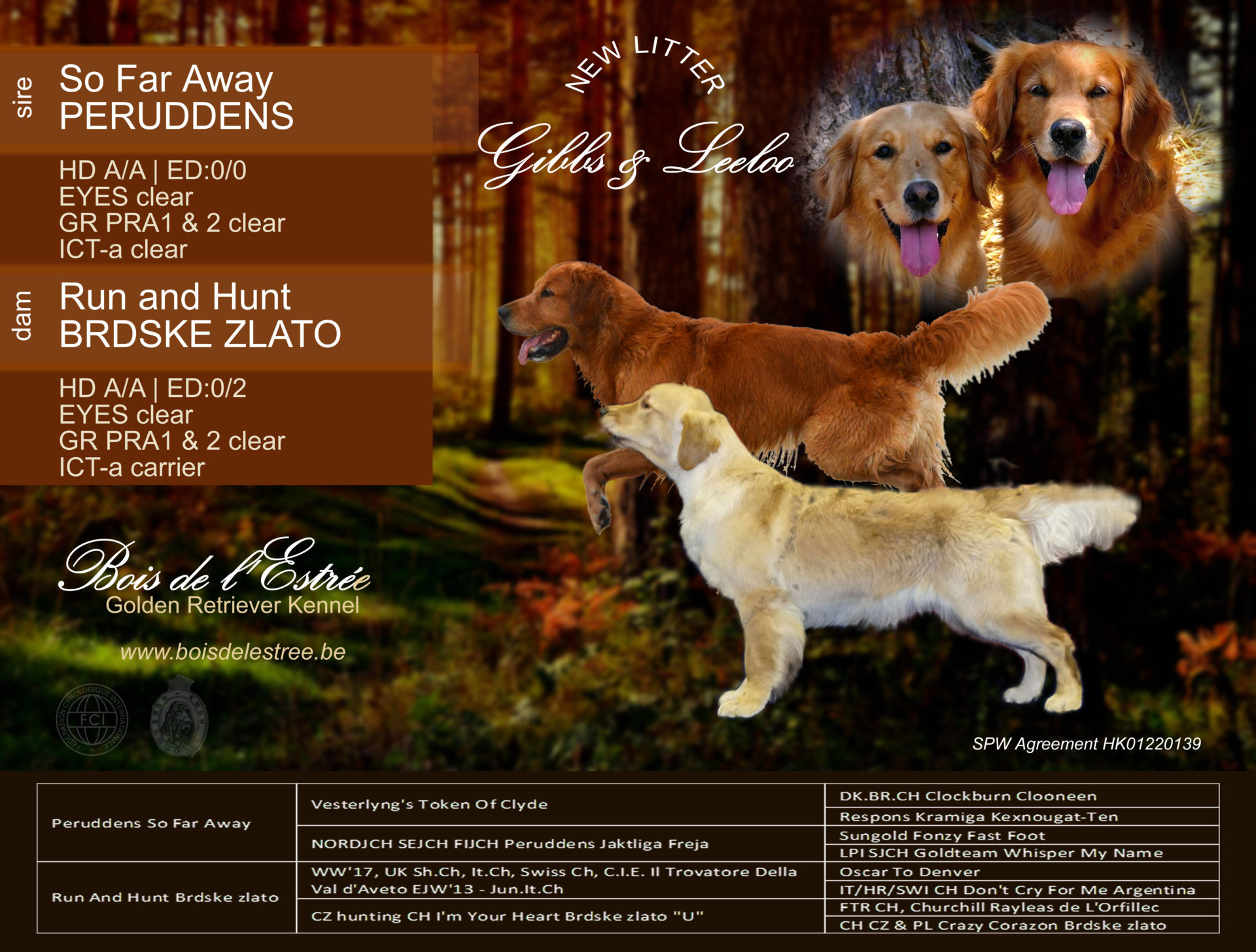 Last litter November 2019 – Run And Hunt Brdské zlato